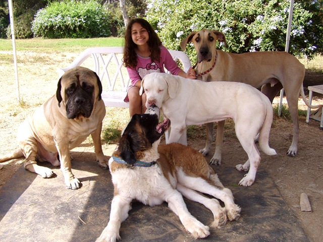Huge Pooches A Post About Big Dawgs Dogsarethecoolest