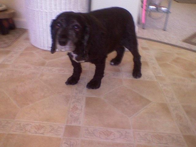 Must see Heavy Chubby Adorable Dog - bigfatdog  Pic_451397  .jpg