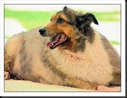 fatdog-smiling