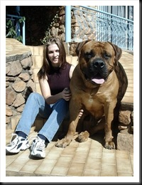 huge-bulldog