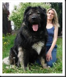 hugedog