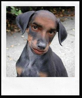 Half-man Half-dog breed is freaky   DogsAreTheCoolest - photo#2