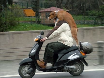 dog on back of motor bike.